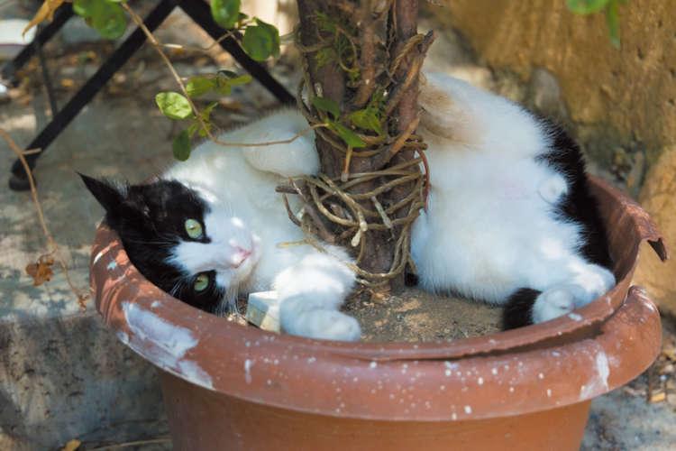 出会った直後から、甘えてきた黒白猫さん。