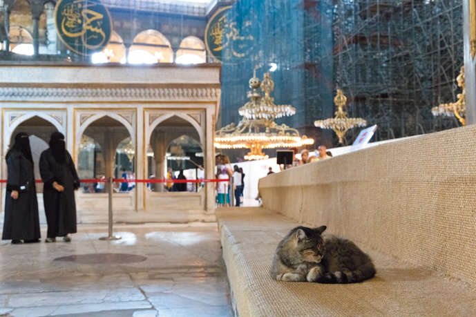 【トルコ/イスタンブール】やさしい街のおじゃま猫 岩内喜久子