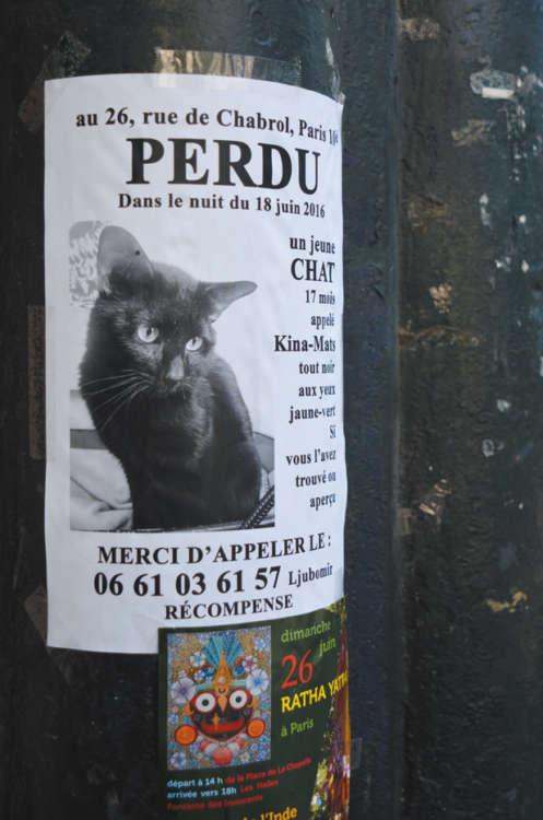 パリ市内で度々見かける「猫探し」