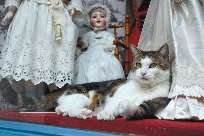 【猫びより】【Chats à Paris】パリで猫散歩 横井一夫(辰巳出版)