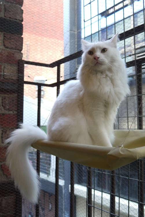 真っ白で美しい毛並みのジャスパー君