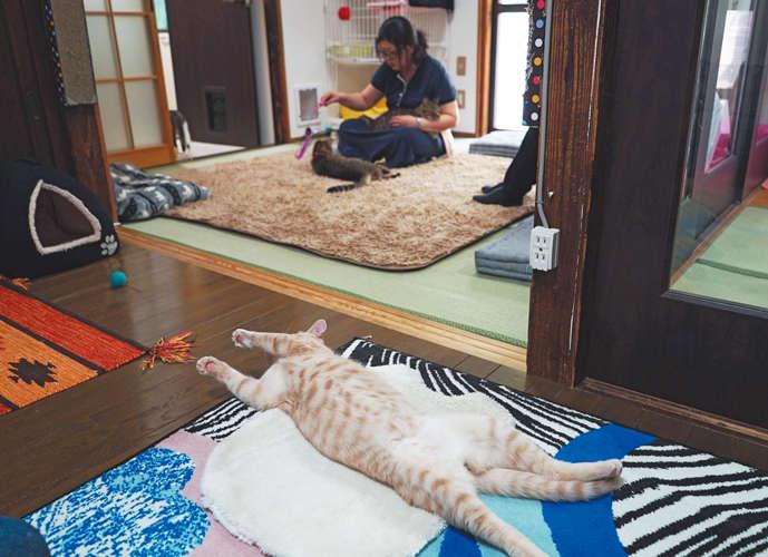 鎌倉散策の合間に、ちょっと「猫見亭(ねこみてい)」!【from Japan】