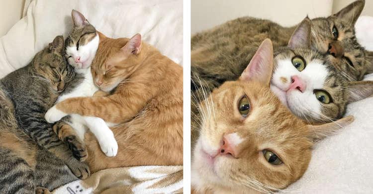 【むぎゅっと密着3兄弟♪】これでもかという程、くっつく猫たちの姿に… 胸のトキメキが止まらない♡