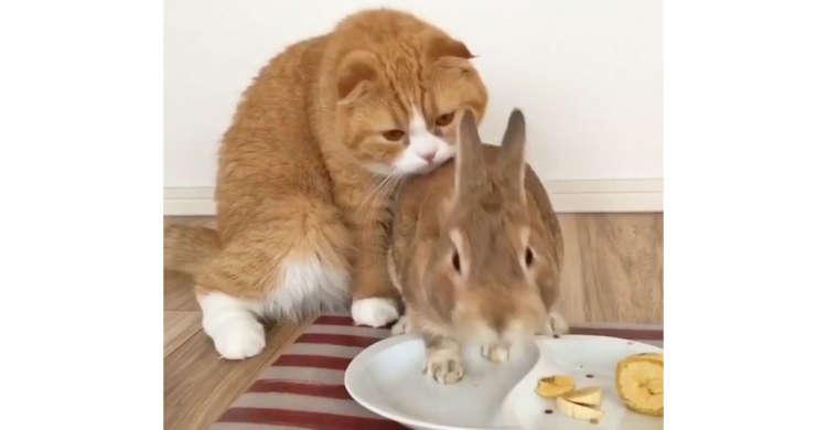 ニャンコに近づかれても、大好きなバナナの前では動じないウサギさん。その温度差が…(笑)