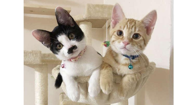保護猫でお家にやって来たメイちゃんと、りくくん。シンクロする2匹の可愛さにメロメロ…(13枚)