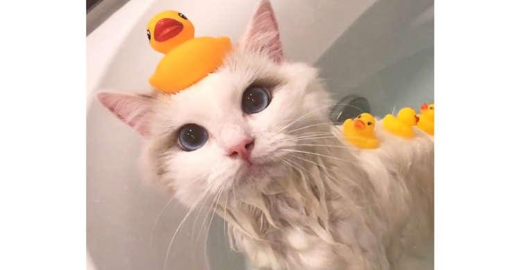 アヒルを乗せてのほほ〜ん♪ お風呂大好きなニャンコさんのバスタイムに、和みっぱなしの52秒♡