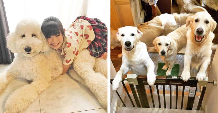 【大型犬のいる暮らし】抱きついたり盛大にお出迎えされたり! 幸せすぎる様子に、口元がゆるむ♡(8枚)