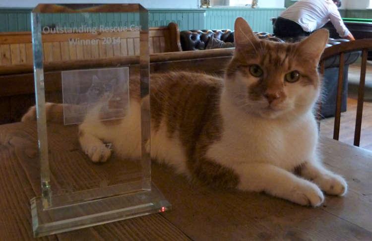 街中にたたずむ、猫の彫像【英国】