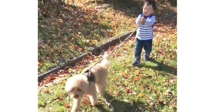 【こっちにいくワン♪】ワンコと小さな男の子の立場逆転なお散歩の様子に…ほっこりする(*´ω`*)♡
