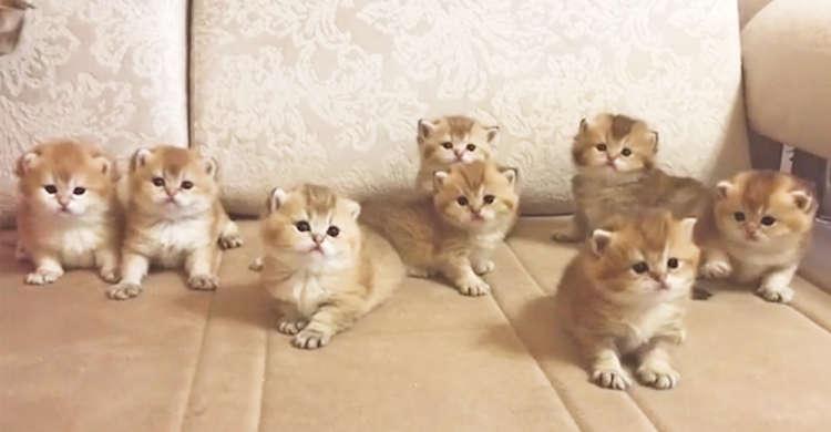 【分身の術…!?】見分けがぜ〜んぜんつかない子猫たちが集合♪ シンクロして首を振る様子が…♡