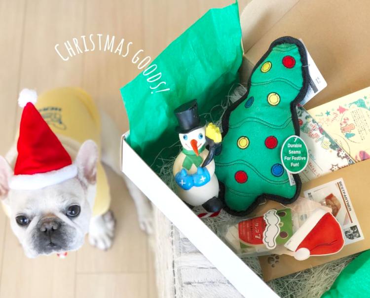 PECOBOXのクリスマス号、お申し込み受付延長♪ 愛犬が喜ぶギフトについて、詳しく解説します!