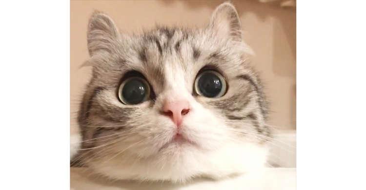 """【視線がキョロキョロ】まん丸おめめで """"何か"""" をジっと見続けるニャンコ。可愛すぎる仕草に…キュン♡"""