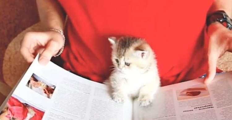 【読書の秋♪】前足をポンっと置き、本に興味津々な子猫。その様子が本を読んでいるようで…(*´ω`)♡