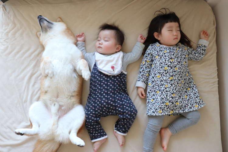 癒される♡という声が続出中! 子供&柴犬の癒されフォトブック「子守り柴犬 銀兄ちゃん」が発売