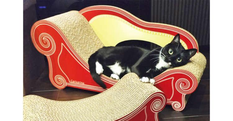 【中世ヨーロッパの世界♪】高貴なソファでくつろぐニャンコ → でも実は○○をしているだけで…(笑)