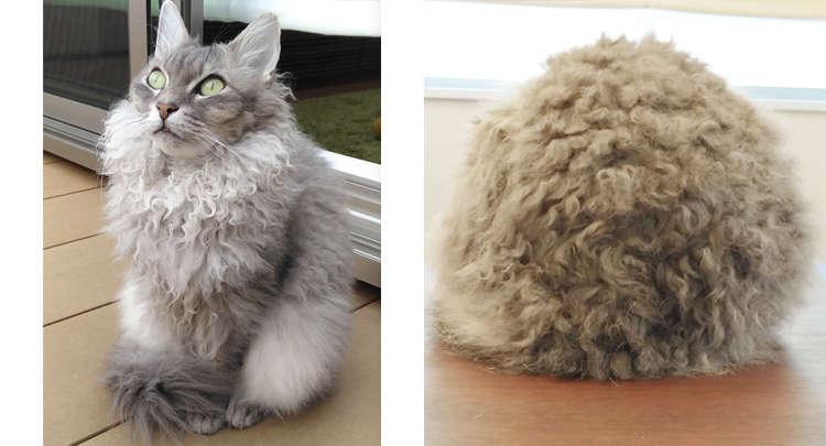 【くりくりニャンコ♡】カールした毛が可愛い美猫ちゃん。あったかそうな姿にほっこりしちゃう(´3`)♪