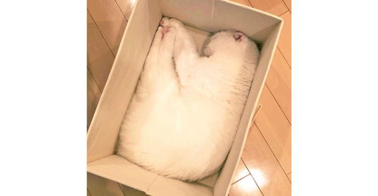 【変幻自在だニャ♪】ピタッと四角い箱にフィットした、『もふもふの白いモノ』が可愛いと話題に♡