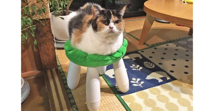 猫の足が…まるでロボット!? 椅子に座るニャンコが『猫型ロボット』のようだと話題に(∩´∀`)∩