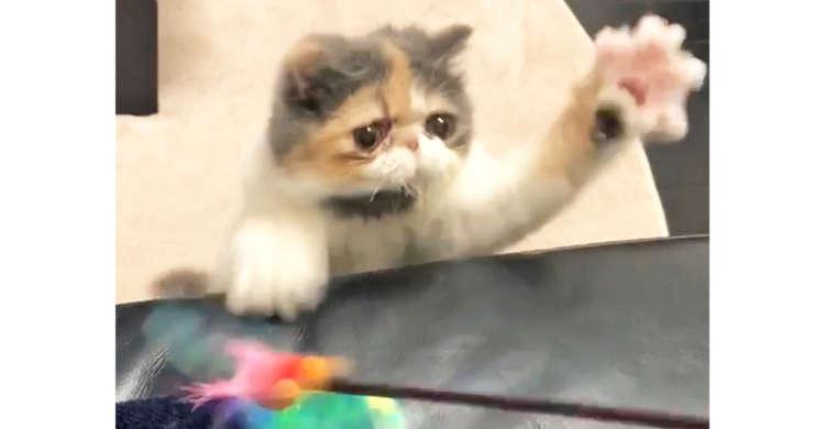 目にも止まらぬ速さでオモチャをつかまえようとするネコ。通常の3倍のスピードで動く姿がスゴすぎた♡