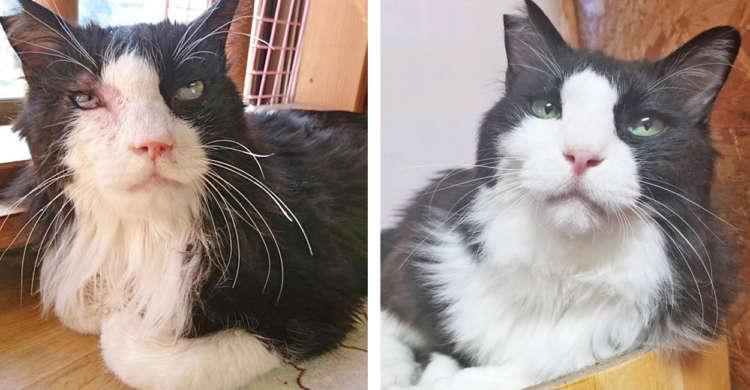 具合が悪いところを保護された猫。エイズに癌…次々に病がみつかるも飼い主さんと共に乗り越えてゆく!