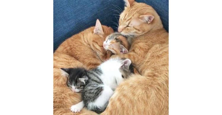 先住猫がパパの代わりになって子ネコに毛づくろい → その溢れる優しさに、胸が熱くなる♡