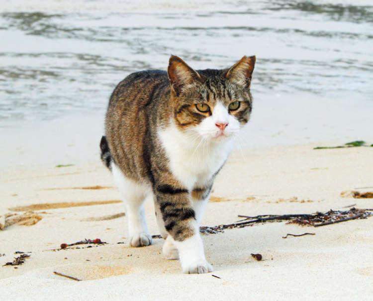 沖縄の美しい風景の中、さくら猫が着々と増えている