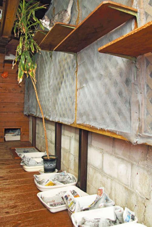 國吉さんのお宅の1階は全て猫部屋。贅沢な手作りスペース