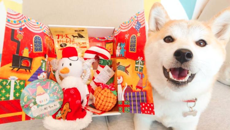 PECOBOXクリスマス号には、何が入っていた? 中身を覗いてみました♪