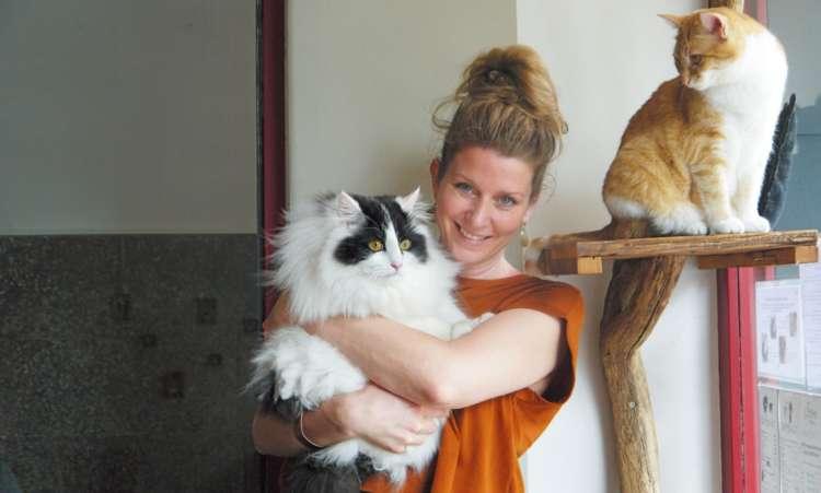 【猫びより】4匹の猫店員と過ごす至福の時間【from Germany】(辰巳出版)
