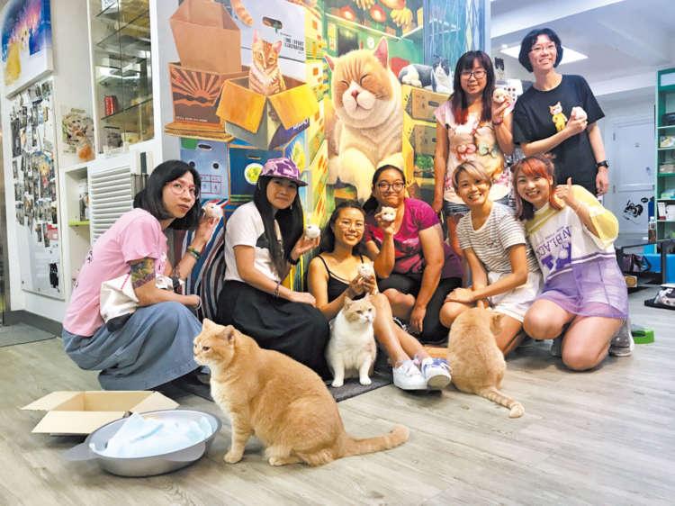 【猫びより】スター猫「クリームあにき」のボンボン人形を作ろう!【from Hong Kong】