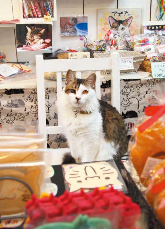 手作り猫おもちゃやポップな猫グッズがいっぱい!