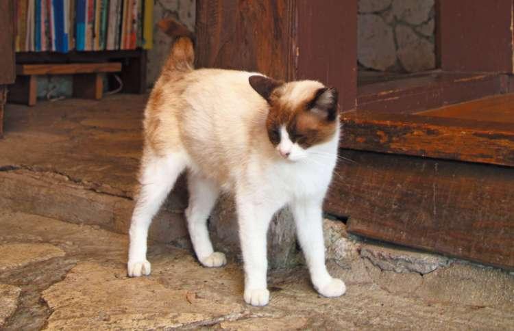"""不妊手術が施され""""さくら猫""""となった、のん。子どもたちはオーナーさんの家で暮らしています"""