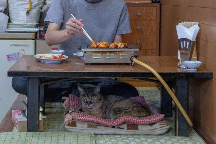地域猫から焼肉屋の接客係に転身【小平】