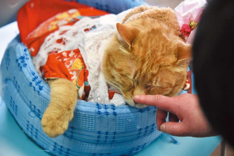 【猫びより】保護猫からセラピー猫へ(辰巳出版)