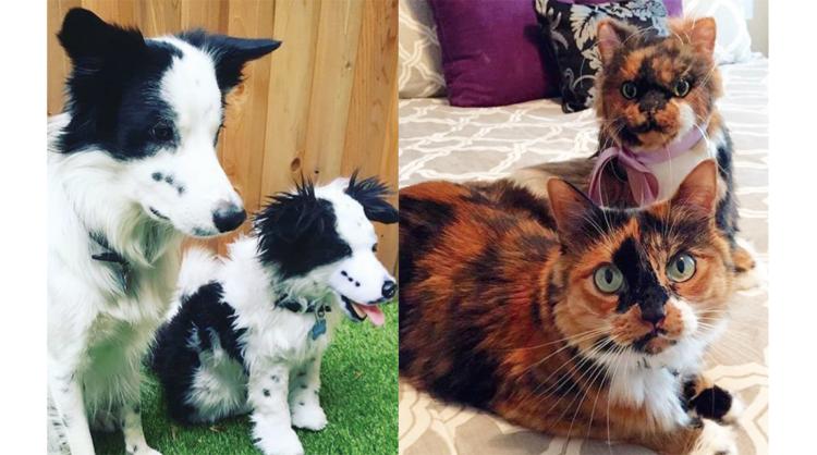 犬のオーダーメイドぬいぐるみって? 愛犬・愛猫など愛するペットの人形を作ろう!