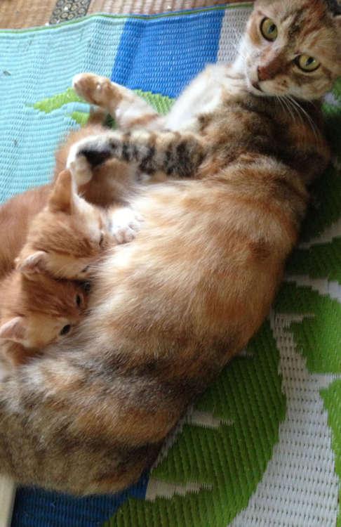 3匹の子猫を産んだ、ねねちゃん