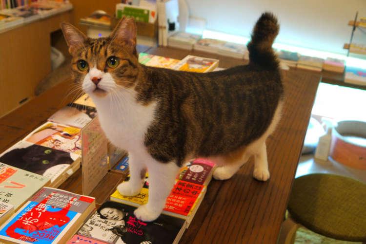 【猫びより】4匹の猫店員が接客してくれる本屋さん【三軒茶屋】(辰巳出版)