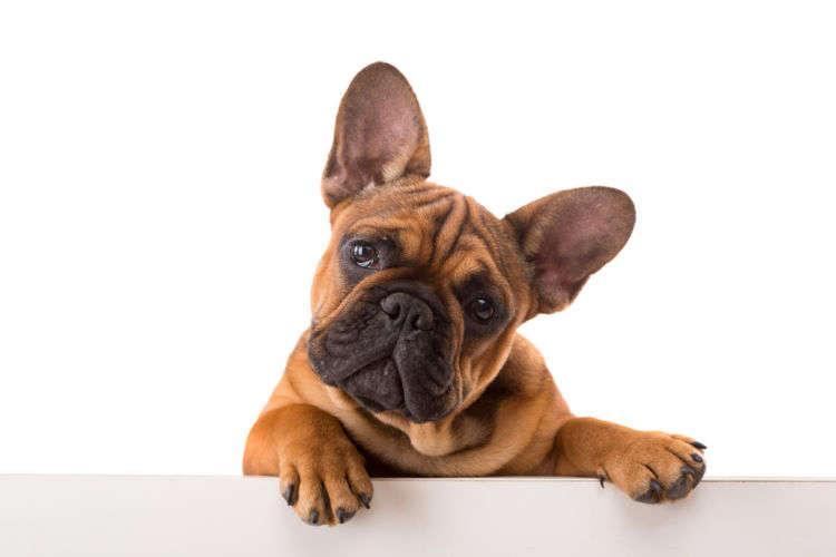 【獣医師監修】犬が大豆(生)を食べても大丈夫?犬の大豆アレルギーや注意点は!?