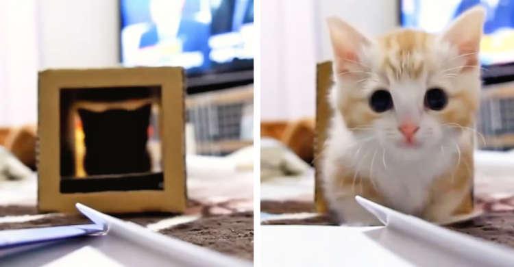 ダンボールから…子猫がジャジャーンと登場! 何度も出入りして遊ぶ姿から、目が離せないっ(∩´∀`)∩