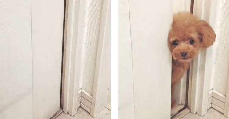 扉が…勝手に開いた!? → ワンコさんがコンニチハ♪ 飼い主さんへの、一途な想いが伝わる33秒♡