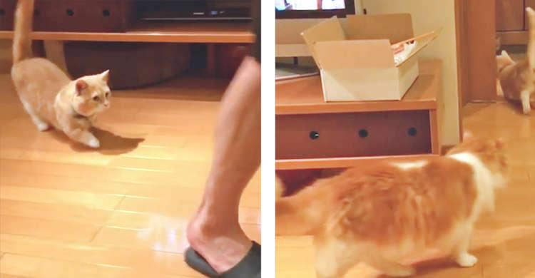【追いかけられたいっ♡】パパさんの後ろを猫たちがトコトコ♪ 可愛すぎるニャンニャンストーカー!
