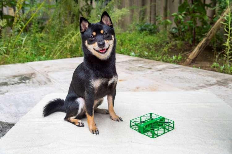 愛犬写真の幅が広がる! 最新ドローンSQUARED CAM(スクアードカム)×柴犬=無限の可能性
