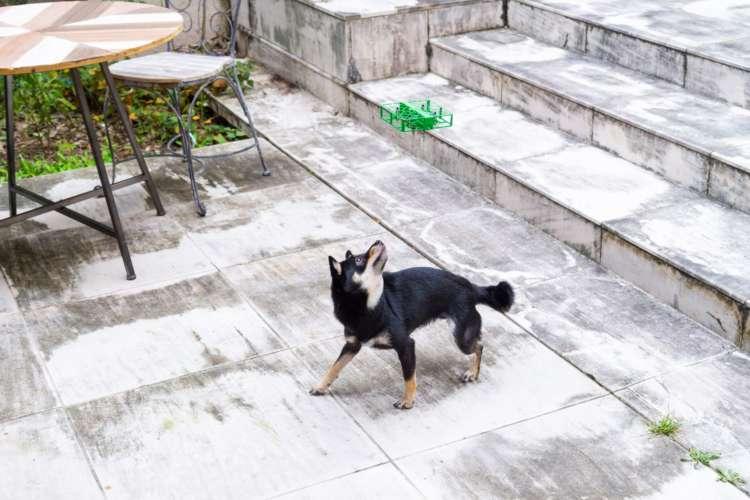 愛犬の撮影を遊び感覚で楽しめるのはドローンならでは