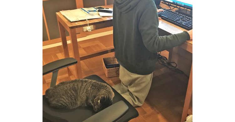 猫のいる仕事場にて「膝に乗せて仕事したいなぁ」と夢を抱くも… → 見事に打ち砕かれる(`;ω;´)