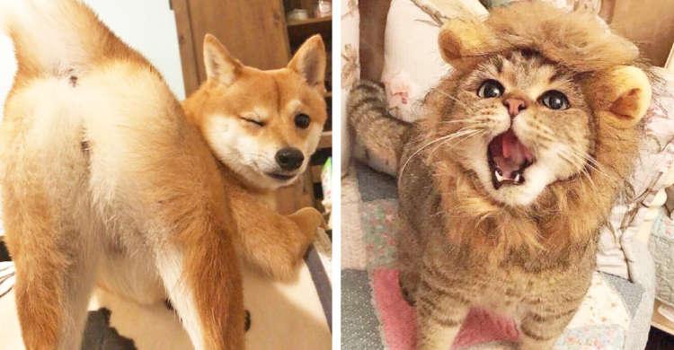 【PECOいぬ部&ねこ部】今年もっとも「いいね!」が多かった犬猫動画や写真は…(*´艸`*)?