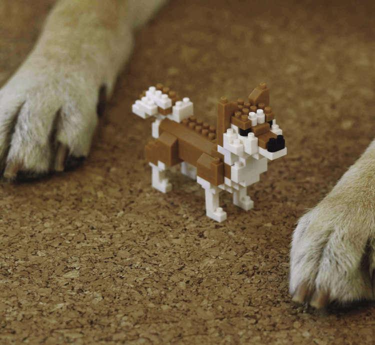 愛犬の一部と共演①