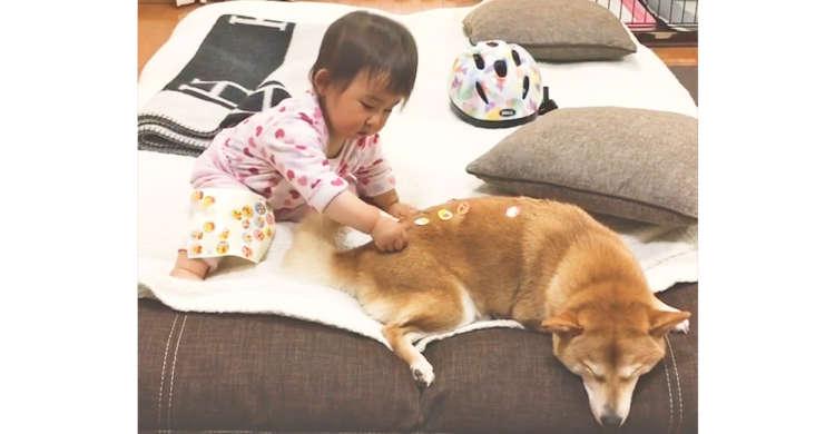 赤ちゃんに、シールをペタペタ貼られても気にしない柴犬♪ ふたりの仲の良さが伝わってくる60秒♡