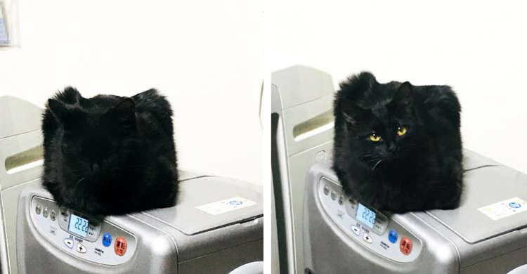 """【こんな箱あったっけ?】部屋の中で見覚えのない""""箱""""を見つけた飼い主さん。その正体は…♡"""