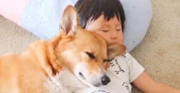 仲良くお昼寝する男の子とコーギー。密着するふたりの様子に、ほっこりが止まらない(○´ω`○)♡