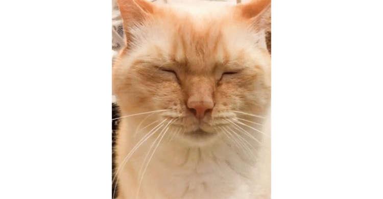 【切な顔 → 脱力顔へ♪】ふんばり顔が最高に愛らしいニャンコ。表情の変化に思わずクスッ( *´艸`)